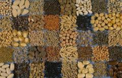 Seeds of grain and commercial crops on crops...