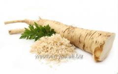 La raíz del rábano silvestre, fresc