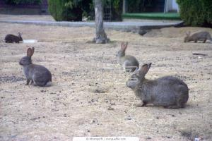 Breeding rabbits, farm