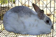 Carcass of a rabbit, farm, wholesale