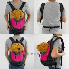 Bags and carryings for dogs. Crazy Paws backpack