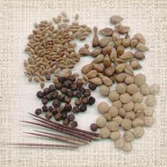 Дражированные семена пакетированные.