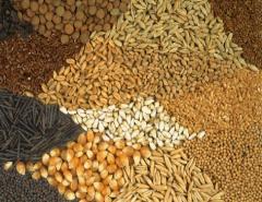 Пакетированные семена.