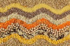 Семена овощей. Оптовая торговля семенами.