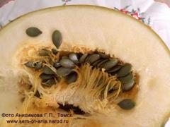 Raw materials for production of oil pumpkin