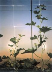 Шпалерная сетка hortinet 11fh, tenax 1х1000м