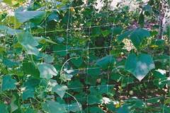 Шпалерная сетка hortinet 13fh, tenax 1,2х1000м