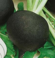 Black Koolatah / kulata — a radish, semo of 1 000