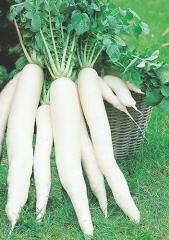 Yapana f1/japana f1 — a radish, semo of 400 grams