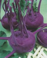 Violeta / violeta — cabbage of a kohlrabi, semo of