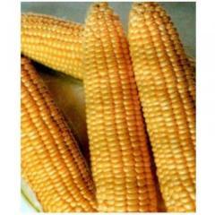 Dimax. (Tan) f1/dimax f1 — corn, may seeds of 5 kg