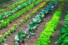 Средства защиты растений Презенс, Укравит, Баер, Сингента: препарат Антипырей