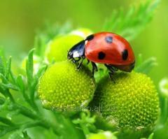 Средства защиты растений Презенс, Укравит, Баер, Сингента: препарат Антиколорад