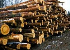 Кругляк из сосны, березы и дуба, древесина, брус