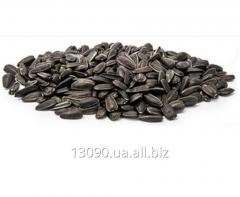 Confectionery kernel of sunflower seeds