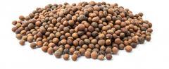 Vika (beans і)