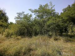 Land for development, and Paul Borshchagovka