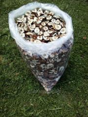 Mushroom frozen