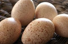 Egg incubatory indyushiny