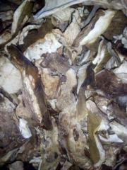 Morozheny mushroom