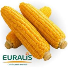 Bombastik corn