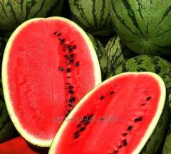 The water-melon is long