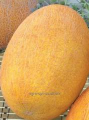 Melon Bereginya