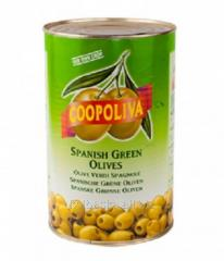 Conservas fermentadas/saladas de verduras