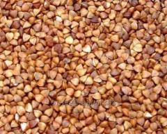 Buckwheat, buckwheat.