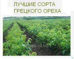 Walnut, fruit trees. plant seedlings, planted