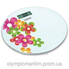 Trademark: Maestro division Price: 1 kg of Colour: