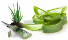 Food fragrance of the Aloe belief With