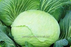 "Seeds of cabbage ""Snow White"