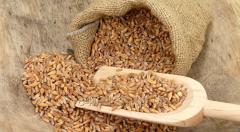 Пшеница спельта