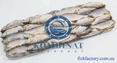 Shelled roaches. Freshwater fish in Ukraine