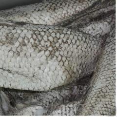 Headless humpback salmon fresh-frozen