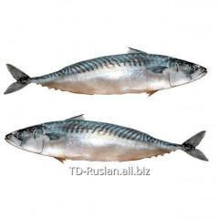 Ivasa herring salty Ivasa herring, she is