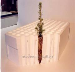The cartridge for seedling of coniferous cultures,