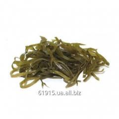 Laminarias of thallus (sea cabbage)