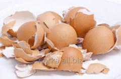 Egg shell as fertilizer for tomatoes, cucumbers