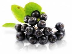 Mountain ash black-fruited