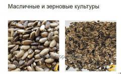 The seeds (fruit) Milk Thistle - Milk Thistle