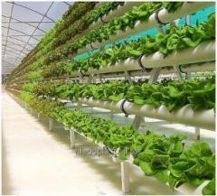 Гидропонные системы для  выращивания растений без почвы
