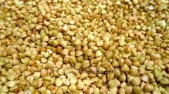 Buckwheat green (not fried)
