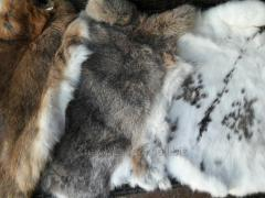 Skins of a rabbit vychinenny