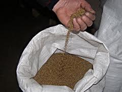 Seeds of fodder lucerne, Ukraine