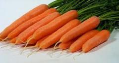 Carrots Lagoon