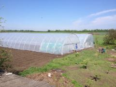 Film greenhouses 500 m2