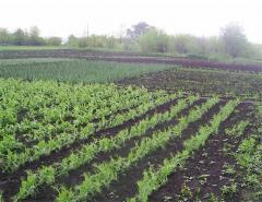 Plaza-analog fungicide of impakt (flutriafol