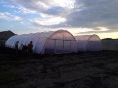 Greenhouse of film 7х20 m